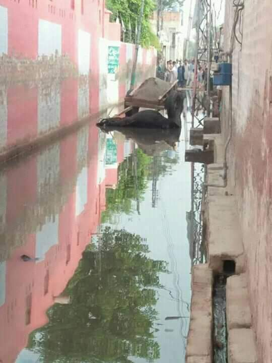 وفاقی وزیر فخر امام کا حلقہ سیوریج کے پانی میں ڈوب گیا جانور بھی مرنے لگے