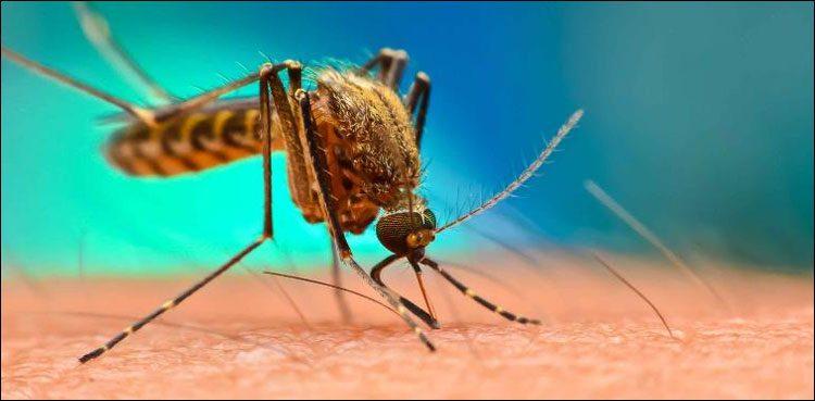 ڈینگی بخار سے صحتیاب افراد کورونا سے محفوظ رہتے ہیں ، تحقیق