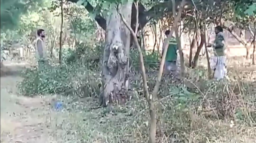 اسلام آباد کے ماحول پر حکومت کا حملہ، مرگلہ نیشنل پارک سے درختوں کی کٹائی