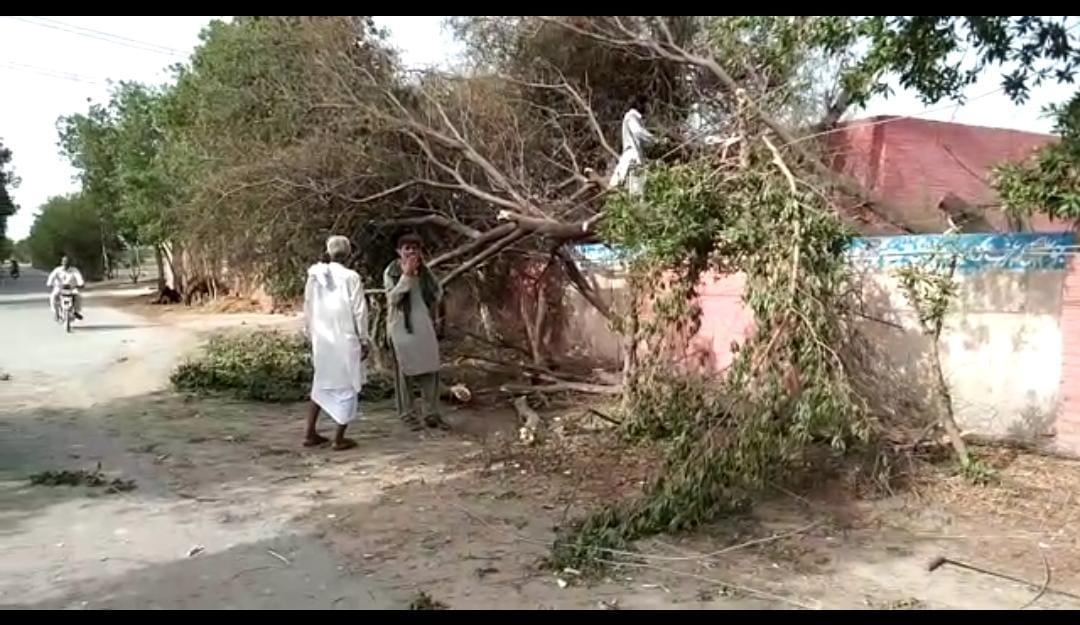 پاکپتن میں سرکاری زمین سے قیمتی درختوں کی کٹائی، بلین ٹری منصوبہ کو نقصان